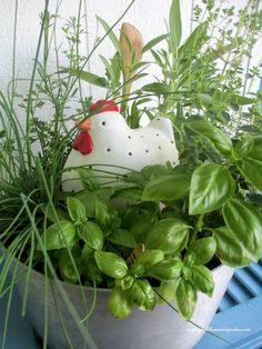 Hometalk | container gardening ideas :: 360 Sod (Donna Dixson)'s clipboard on Hometalk
