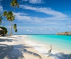 Best All Inclusive Resorts In Punta Cana Dominican Republic