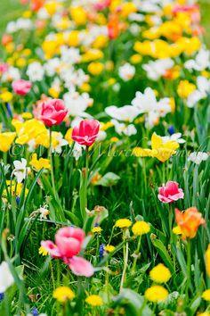 Vårvackert – tack Lunds kommun | blomsterverkstad | Sköna Hem