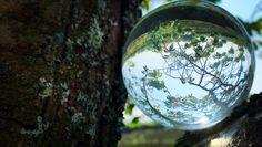 Rollei Lensball I glass ball I crystal ball I photo ball with storage bag & microfibre cleaning cloth for glass ball photography My Glass, Glass Ball, Palm Of Your Hand, The Other Side, Crystal Ball, Photo Tips, Bag Storage, My Photos, The Incredibles