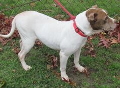 ADOPTED!!! LINDA...FOUND IN CANTON, OHIO... https://www.petfinder.com/petdetail/30747546/