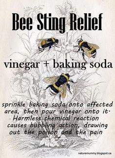 Stings happen. Be prepared to ease the pain. Check out this post. Carolina Honeybees #beekeepingideas #beekeeper #beekeepingtips