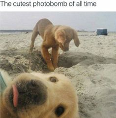 Cutest Photodoggies Dogs And Puppies Funny Puppies Adorable Puppies Cutest Puppy