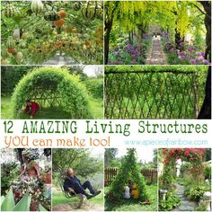 Amazing Living Structures | A Piece of Rainbow