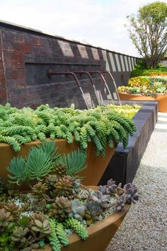 Jardim de Stefania: * jardim de suculentas