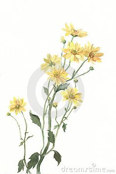 yellow watercolor flower - Google Search