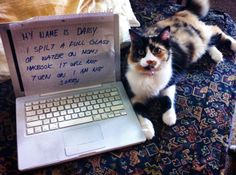 """My name is Daisy.""  I spilt a full glass of water  on Mom's Macbook.  It will not turn on.  I am not sorry."""