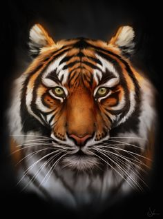 It's been soooo long since I post here on DA! So this is a Sumatran tiger painted from different references on Photoshop, Wacom tablet. It's a shame suc. Save The Tiger Big Cats Art, Cat Art, Animal Paintings, Animal Drawings, Beautiful Cats, Animals Beautiful, Art Tigre, Tigers Live, Save The Tiger