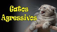 Gatos agressivos. #31
