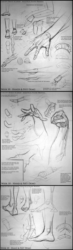 Hand & feet notes - analyticalfiguresp08.blogspot - Kevin Chen #analytical #drawing #figureDrawing #instructorDemo #structure