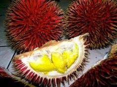 Durian Merah (Red Durian)