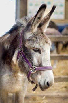 Donkey Care in Winter ♥ *•. ❁.•*❥●♆● ❁ ڿڰۣ❁ ஜℓvஜ♡❃∘✤ ॐ♥..⭐..▾๑ ♡༺✿ ♡·✳︎· ❀‿ ❀♥❃.~*~. TUE 29th MAR 2016!!!.~*~.❃∘❃ ✤ॐ ❦♥..⭐.♢∘❃♦♡❊** Have a Nice Day! **❊ღ༺✿♡^^❥•*`*•❥ ♥♫ La-la-la Bonne vie ♪ ♥❁●♆●○○○