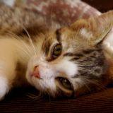La douleur chez le chat : 5 signes qui doivent vous alerter