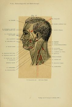 Electrotherapy chart. 1906. Berlin.