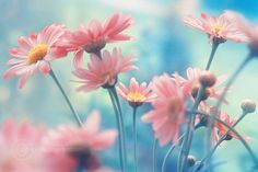 blue flowers nature photography pink inspiring picture on Favim Flowers Nature, My Flower, Pink Flowers, Flower Power, Beautiful Flowers, Pink Nature, Happy Flowers, Beautiful Images, Daisy Love