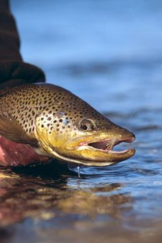 Angler's West Guided Fly Fishing   Emigrant, MT   Go Do Things