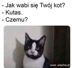 Awesome Entertainment Memes To Make You Laugh - LADnow Funny Shit, Funny Cats, Funny Animals, Cute Animals, Hilarious, Memes Humor, Funny Memes, Meme Page, Cat Names