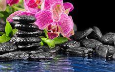 камни, розовый, Цветок, орхидея, черные, плоские, вода
