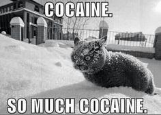 Cat on Cocaïne