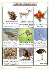نتيجة بحث الصور عن صور التنقل عند الحيوان Printer Driver