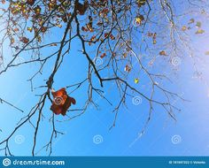 Photo about Autumn background with tree branches and yellow-brown leaves against blue sky. Image of london, photography, blue - 181697322 London Plane Tree, Yellow And Brown, Blue, Tree Branches, Victoria, Leaves, Autumn, Stock Photos