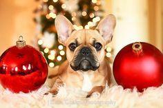 christmas, dog, and red image
