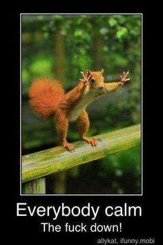 Squirrel on rail urging calm