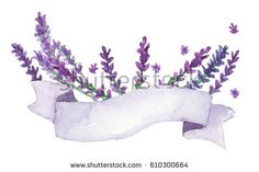 Watercolor lavender with ribbon
