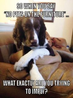 If you want the best seat in the house you're going to have to convince the dog to give it up!