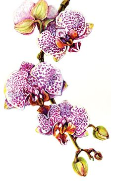 Orchid Phalaenopsis Blume Spotty Dotty 5 Card Set by amberRturner, $20.00