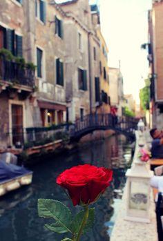 Rose in Venice <3
