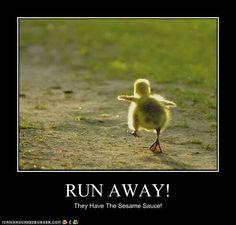 Run fast Lil guy