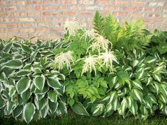 garten mit schatten pflanzen niedriggewaechse idee mauer rasen