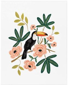 Pottery Barn Toucan by Rifle Paper Co.