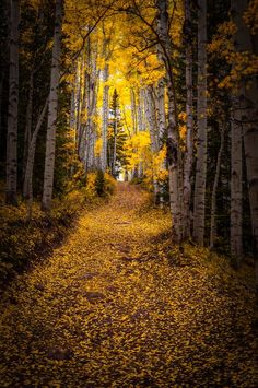 Beautiful Fall picture and Trees