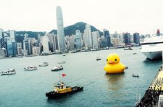 Rubber Duck Attack! by ルーク.チャン.チャン, via Flickr