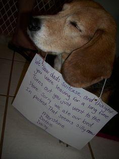 Dog Shame!!