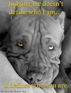 Truth....#pitbulls #love #dogs #doglovers