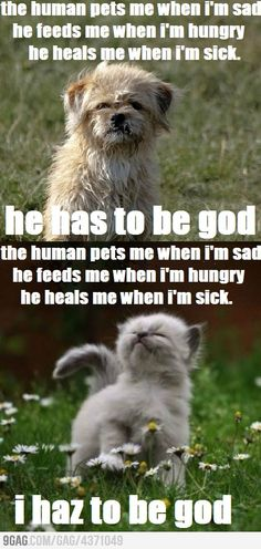 i'm not kidding, made me ponder some spiritual realities. these stupid animal memes are deeper than i thought. ahaha