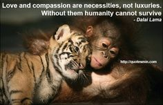 Love and compassion are necessities, not luxuries. Without them humanity cannot survive - Dalai Lama. For more Quotes http://quotesmin.com/topic/Worry.php