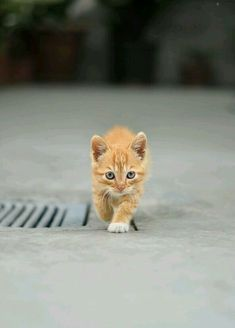 Baby Ginger - Out exploring...