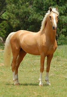Such a gorgeous horse!