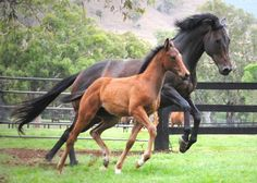 Black Caviar and her little one from 2/20: