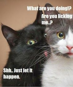 herding cats & burning soup: Quote-tastic (40)-- are you...flirting with me?