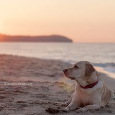 Tosca Niga Umbra, labrador,beach,seaside