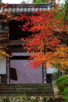 Ryuon-jiTemple,Kyoto