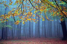 The natural light catching these beeches in the mist of autumn could be photoshopped... but nature beat them to it! (Photo: Roeselien Raimond)
