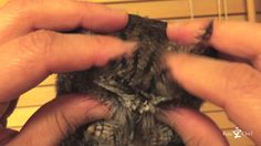 Kuu the tiny screech owl who likes making dramatic entrances, enjoys a relaxing massage generously given to him by his human. Just a few days earlier, Kuu had performed the impressive feat of getti...