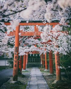 New sakura tree japan spring Ideas Tree Photography, Amazing Photography, Landscape Photography, Beginner Photography, Walmart Photography, Photography Reflector, Photography Composition, Photography Courses, Photography Backdrops