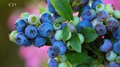 Flora, Garden, Garten, Lawn And Garden, Plants, Gardens, Gardening, Outdoor, Yard
